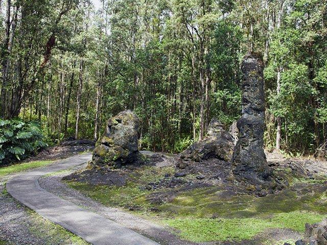 Uwięzione w lawie pnie drzew na Hawajach